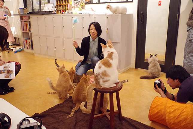 さくら先生の猫の遊び方レッスン中